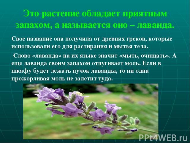 Это растение обладает приятным запахом, а называется оно – лаванда. Свое название она получила от древних греков, которые использовали его для растирания и мытья тела. Слово «лаванда» на их языке значит «мыть, очищать». А еще лаванда своим запахом о…