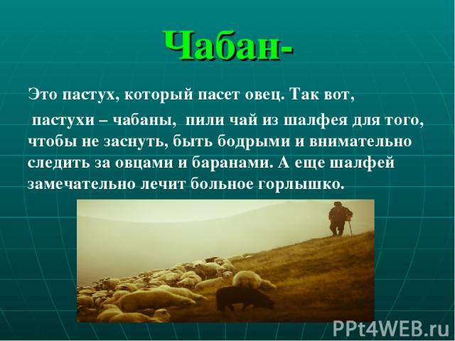 Чабан- Это пастух, который пасет овец. Так вот, пастухи – чабаны, пили чай из шалфея для того, чтобы не заснуть, быть бодрыми и внимательно следить за овцами и баранами. А еще шалфей замечательно лечит больное горлышко.