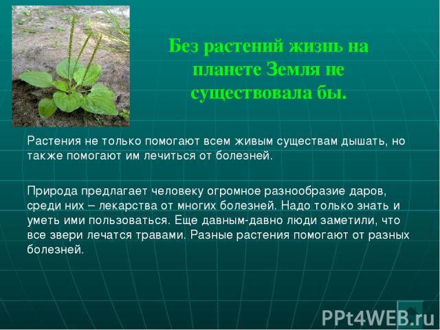 Без растений жизнь на планете Земля не существовала бы. Растения не только помогают всем живым существам дышать, но также помогают им лечиться от болезней. Природа предлагает человеку огромное разнообразие даров, среди них – лекарства от многих боле…