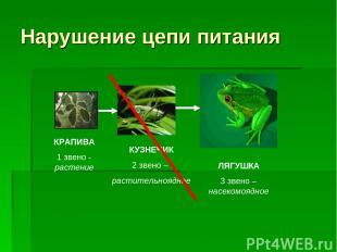 Нарушение цепи питания ЛЯГУШКА 3 звено – насекомоядное КУЗНЕЧИК 2 звено – растит