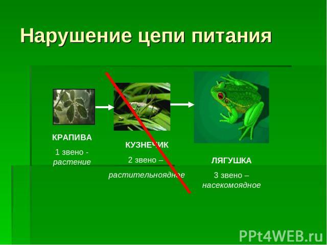 Нарушение цепи питания ЛЯГУШКА 3 звено – насекомоядное КУЗНЕЧИК 2 звено – растительноядное КРАПИВА 1 звено - растение