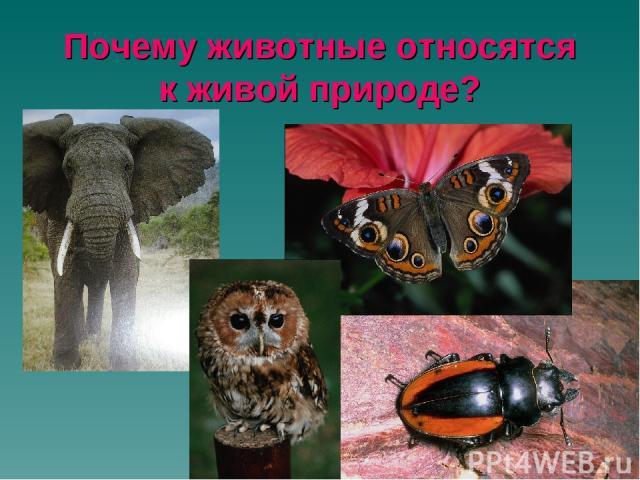 Почему животные относятся к живой природе?