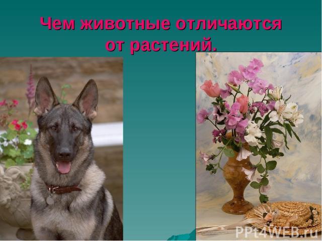 Чем животные отличаются от растений.