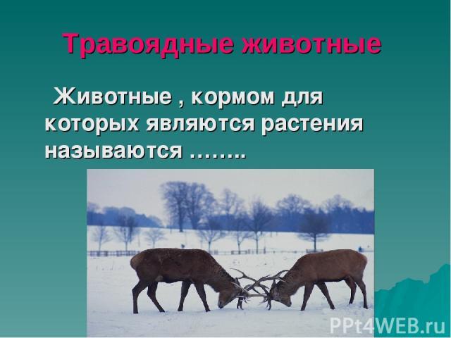 Травоядные животные Животные , кормом для которых являются растения называются ……..