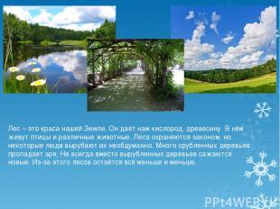 Лес – это краса нашей Земли. Он даёт нам кислород, древесину. В нём живут птицы