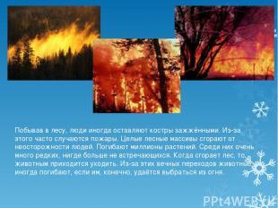 Побывав в лесу, люди иногда оставляют костры зажжёнными. Из-за этого часто случа