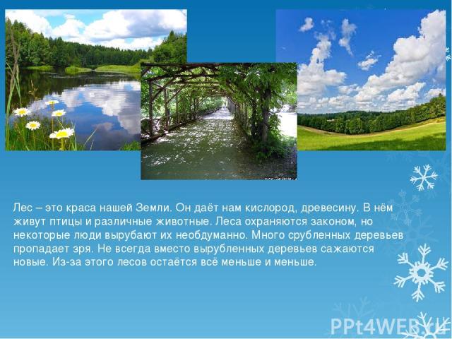 Лес – это краса нашей Земли. Он даёт нам кислород, древесину. В нём живут птицы и различные животные. Леса охраняются законом, но некоторые люди вырубают их необдуманно. Много срубленных деревьев пропадает зря. Не всегда вместо вырубленных деревьев …
