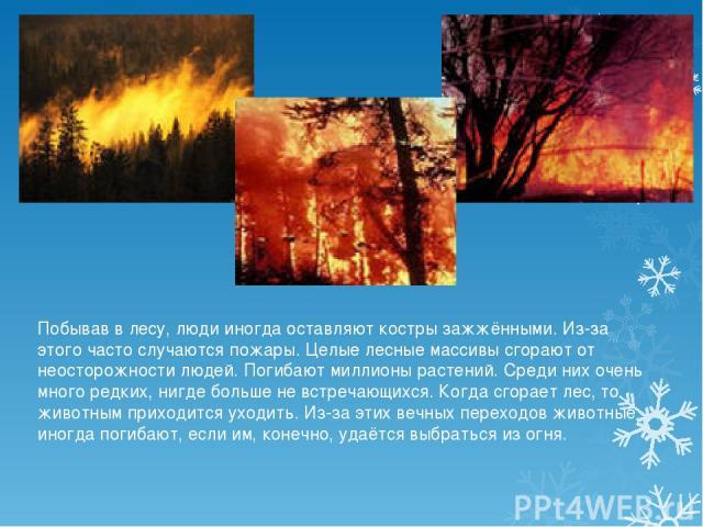 Побывав в лесу, люди иногда оставляют костры зажжёнными. Из-за этого часто случаются пожары. Целые лесные массивы сгорают от неосторожности людей. Погибают миллионы растений. Среди них очень много редких, нигде больше не встречающихся. Когда сгорает…
