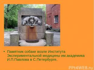 Памятник собаке возле Института Экспериментальной медицины им.академика И.П.Павл