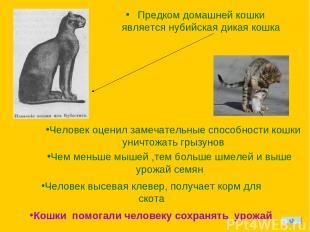 Предком домашней кошки является нубийская дикая кошка Человек оценил замечательн