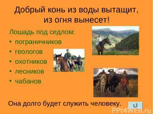 Добрый конь из воды вытащит, из огня вынесет! Лошадь под седлом: пограничников г