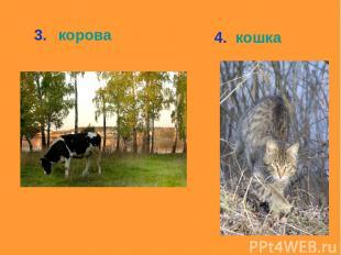 3. корова 4. кошка