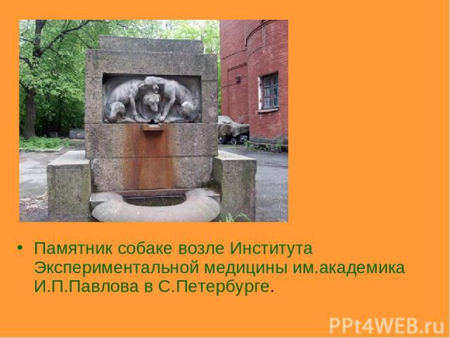 Памятник собаке возле Института Экспериментальной медицины им.академика И.П.Павлова в С.Петербурге.
