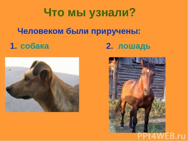 Что мы узнали? Человеком были приручены: 1. собака 2. лошадь