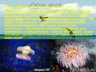 Жизнь моря Фауна Чёрного моря заметно беднее, чем Средиземного, в частности, зде