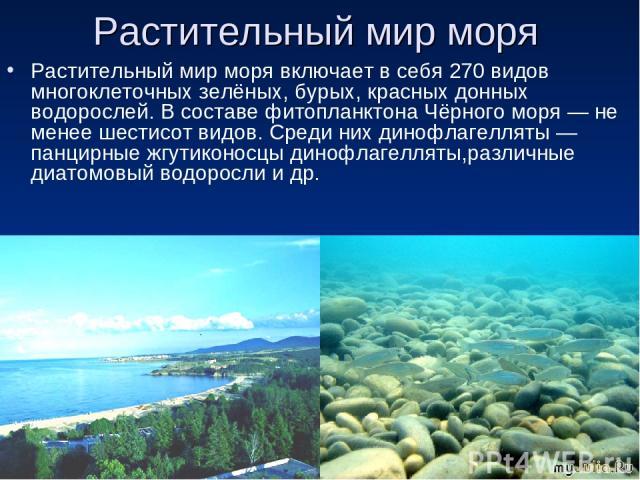 Растительный мир моря Растительный мир моря включает в себя 270 видов многоклеточных зелёных, бурых, красных донных водорослей. В составе фитопланктона Чёрного моря— не менее шестисот видов. Среди них динофлагелляты— панцирные жгутиконосцы динофла…