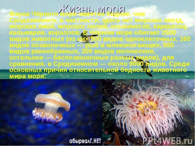 Жизнь моря Фауна Чёрного моря заметно беднее, чем Средиземного, в частности, здесь нет морских звезд, морских ежей, морских лилий, осьминогов, каракатиц, кальмаров, кораллов. В Чёрном море обитает 2500 видов животных (из них 500 видов одноклеточных,…