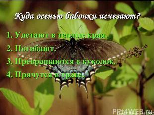 Куда осенью бабочки исчезают? 1. Улетают в теплые края. 2. Погибают. 3. Превраща