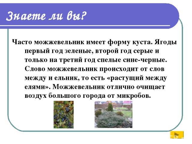 Знаете ли вы? Часто можжевельник имеет форму куста. Ягоды первый год зеленые, второй год серые и только на третий год спелые сине-черные. Слово можжевельник происходит от слов между и ельник, то есть «растущий между елями». Можжевельник отлично очищ…
