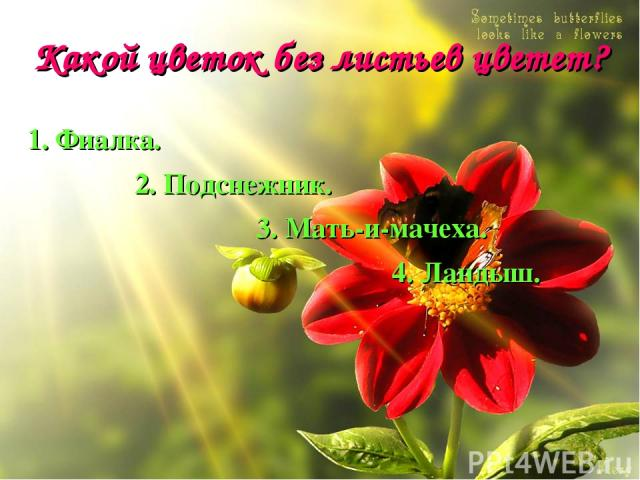 Какой цветок без листьев цветет? 1. Фиалка. 2. Подснежник. 3. Мать-и-мачеха. 4. Ландыш.