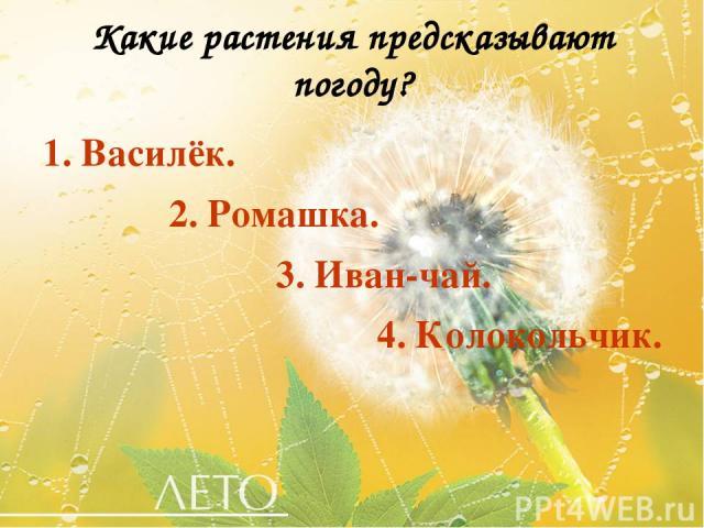Какие растения предсказывают погоду? 1. Василёк. 2. Ромашка. 3. Иван-чай. 4. Колокольчик.