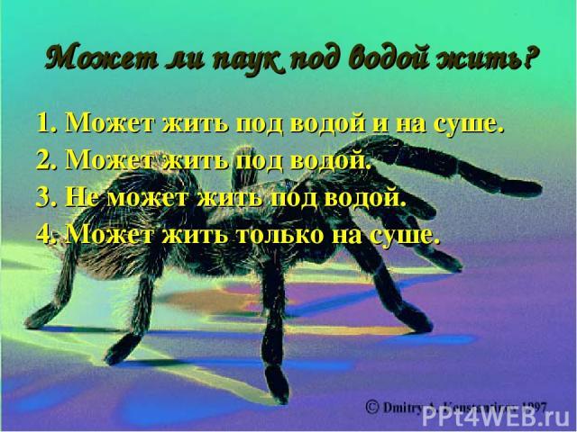 Может ли паук под водой жить? 1. Может жить под водой и на суше. 2. Может жить под водой. 3. Не может жить под водой. 4. Может жить только на суше.