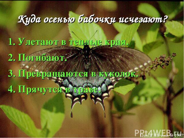 Куда осенью бабочки исчезают? 1. Улетают в теплые края. 2. Погибают. 3. Превращаются в куколок. 4. Прячутся в траве.