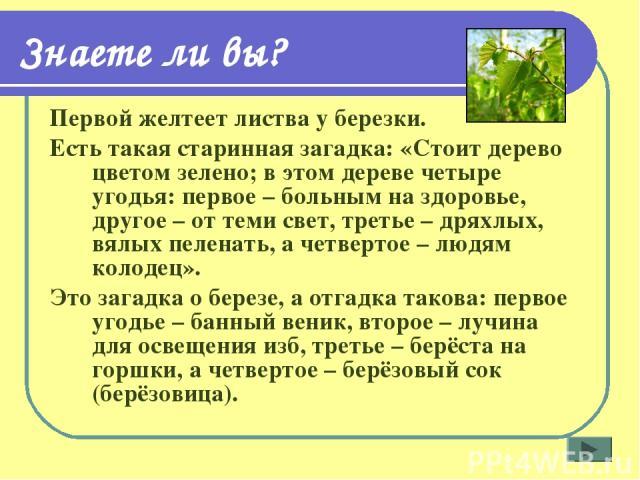 Знаете ли вы? Первой желтеет листва у березки. Есть такая старинная загадка: «Стоит дерево цветом зелено; в этом дереве четыре угодья: первое – больным на здоровье, другое – от теми свет, третье – дряхлых, вялых пеленать, а четвертое – людям колодец…