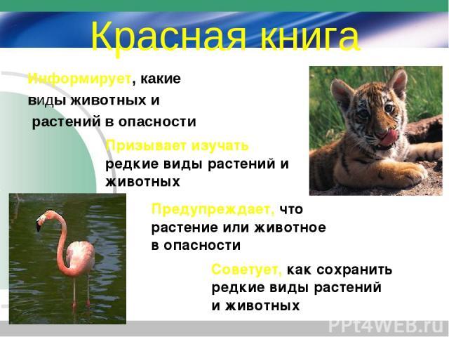 Красная книга Информирует, какие виды животных и растений в опасности Призывает изучать редкие виды растений и животных Предупреждает, что растение или животное в опасности Советует, как сохранить редкие виды растений и животных