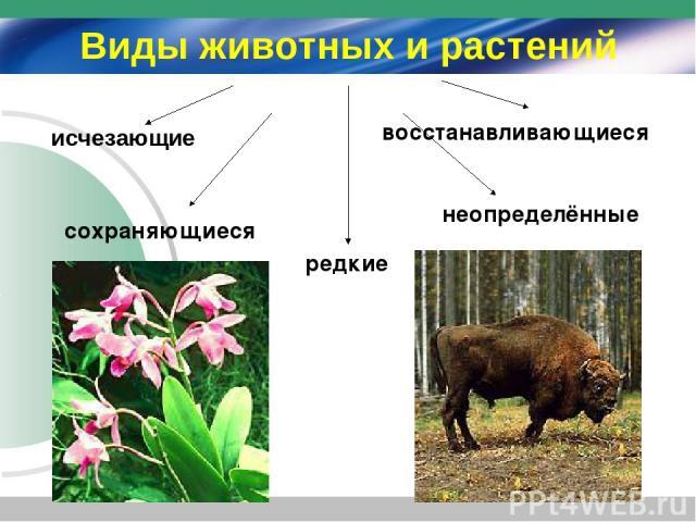 исчезающие сохраняющиеся редкие восстанавливающиеся неопределённые Виды животных и растений