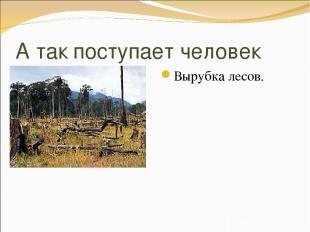 А так поступает человек Вырубка лесов.