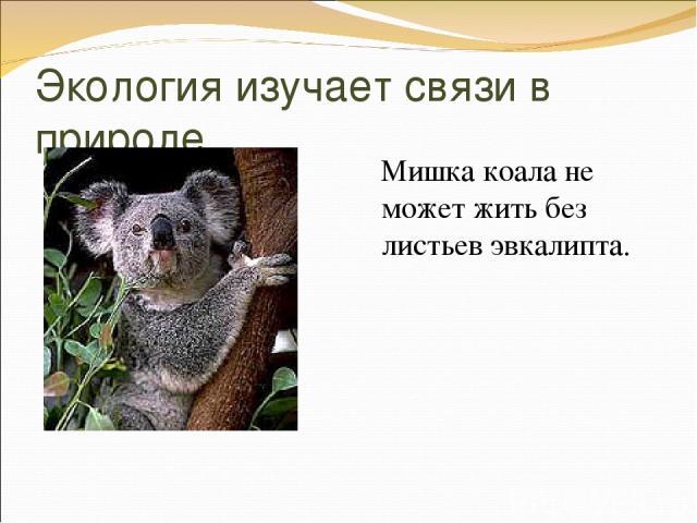 Экология изучает связи в природе Мишка коала не может жить без листьев эвкалипта.
