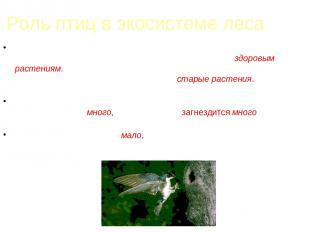 Роль птиц в экосистеме леса Если в лесу количество насекомых, поедающих кору и л