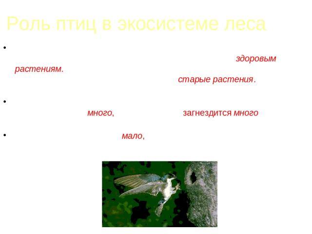 Роль птиц в экосистеме леса Если в лесу количество насекомых, поедающих кору и листья деревьев, чрезмерно увеличится, они начнут вредить здоровым растениям. Круговорот нарушится. Но если насекомых будет очень мало, некому станет нападать на старые р…