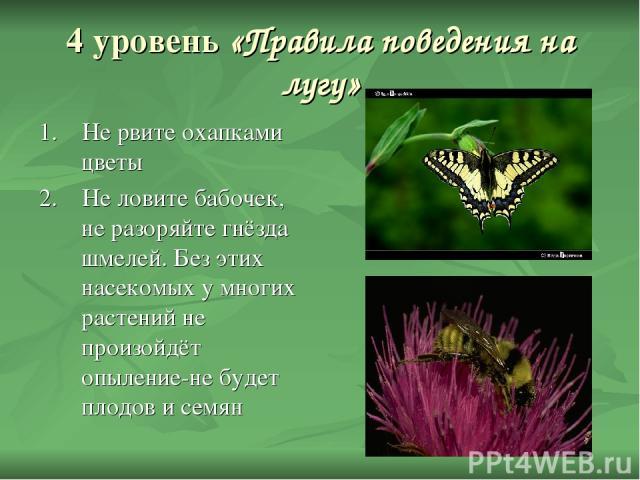 4 уровень «Правила поведения на лугу» 1. Не рвите охапками цветы 2. Не ловите бабочек, не разоряйте гнёзда шмелей. Без этих насекомых у многих растений не произойдёт опыление-не будет плодов и семян