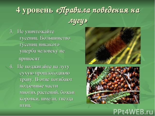 4 уровень «Правила поведения на лугу» 3. Не уничтожайте гусениц. Большинство гусениц никакого ущерба человеку не приносят 4. Не поджигайте на лугу сухую прошлогоднюю траву. В огне погибают подземные части многих растений, божьи коровки, шмели, гнёзд…