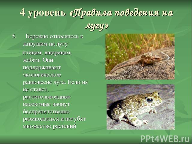 4 уровень «Правила поведения на лугу» 5. Бережно относитесь к живущим на лугу птицам, ящерицам, жабам. Они поддерживают экологическое равновесие луга. Если их не станет, растительноядные насекомые начнут беспрепятственно размножаться и погубят множе…