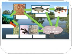 Как связаны организмы в экосистеме озера? мёртвые организмы окунь уклейка рачки