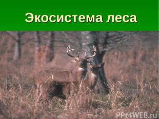 Экосистема леса