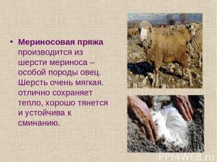 Мериносовая пряжа производится из шерсти мериноса – особой породы овец. Шерсть о