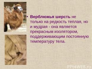 Верблюжья шерсть не только на редкость теплая, но и мудрая - она является прекра