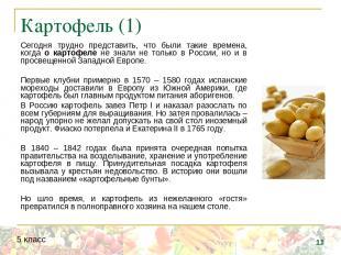 Картофель (1) Сегодня трудно представить, что были такие времена, когда о картоф