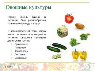 Овощные культуры Овощи очень важны в питании. Они разнообразны по внешнему виду