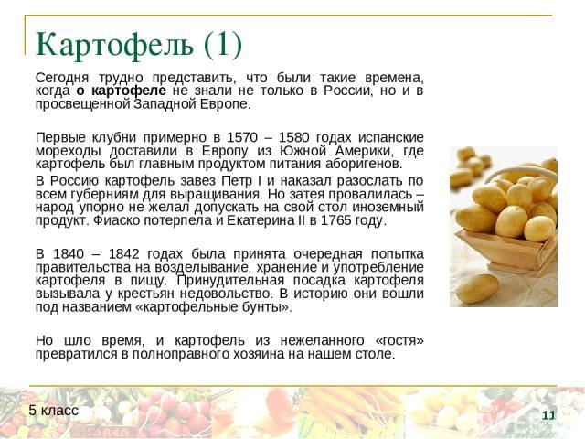 Картофель (1) Сегодня трудно представить, что были такие времена, когда о картофеле не знали не только в России, но и в просвещенной Западной Европе. Первые клубни примерно в 1570 – 1580 годах испанские мореходы доставили в Европу из Южной Америки, …