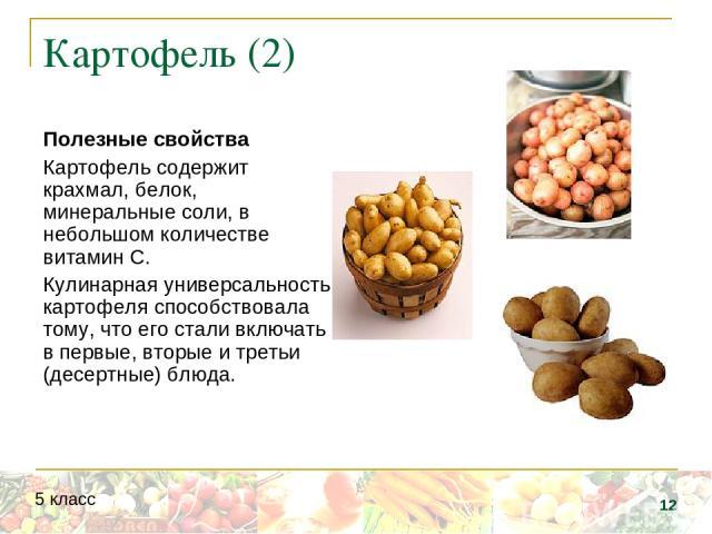 Картофель (2) Полезные свойства Картофель содержит крахмал, белок, минеральные соли, в небольшом количестве витамин С. Кулинарная универсальность картофеля способствовала тому, что его стали включать в первые, вторые и третьи (десертные) блюда. * 5 класс