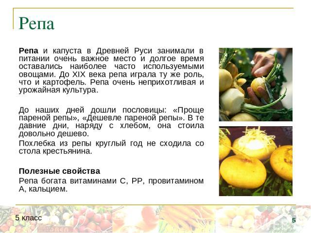 Репа Репа и капуста в Древней Руси занимали в питании очень важное место и долгое время оставались наиболее часто используемыми овощами. До XIX века репа играла ту же роль, что и картофель. Репа очень неприхотливая и урожайная культура. До наших дне…