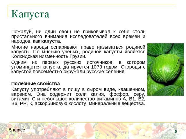 Капуста Пожалуй, ни один овощ не приковывал к себе столь пристального внимания исследователей всех времен и народов, как капуста. Многие народы оспаривают право называться родиной капусты. По мнению ученых, родиной капусты является Колхидская низмен…