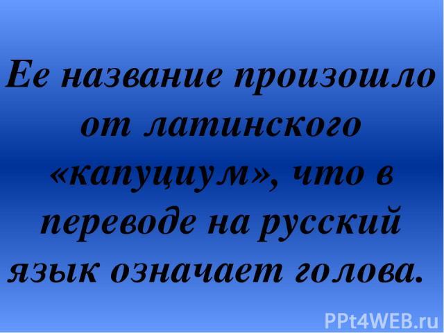 Ее название произошло от латинского «капуциум», что в переводе на русский язык означает голова.