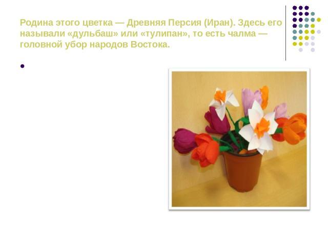 Родина этого цветка — Древняя Персия (Иран). Здесь его называли «дульбаш» или «тулипан», то есть чалма — головной убор народов Востока. В Англии считали, что тюльпан служит колыбелькой для маленьких эльфов и фей. В старой легенде говорилось о том, ч…