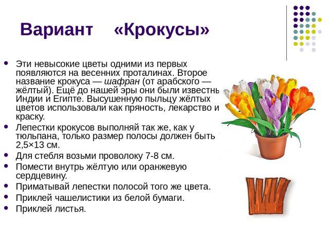Вариант «Крокусы» Эти невысокие цветы одними из первых появляются на весенних проталинах. Второе название крокуса — шафран (от арабского — жёлтый). Ещё до нашей эры они были известны в Индии и Египте. Высушенную пыльцу жёлтых цветов использовали как…